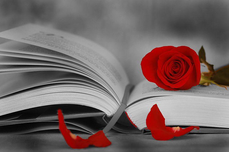 Kitzalet Sant Jordi Libros y rosas - Día del Libro y del Idioma: Shakespeare, Cervantes y Sant Jordi